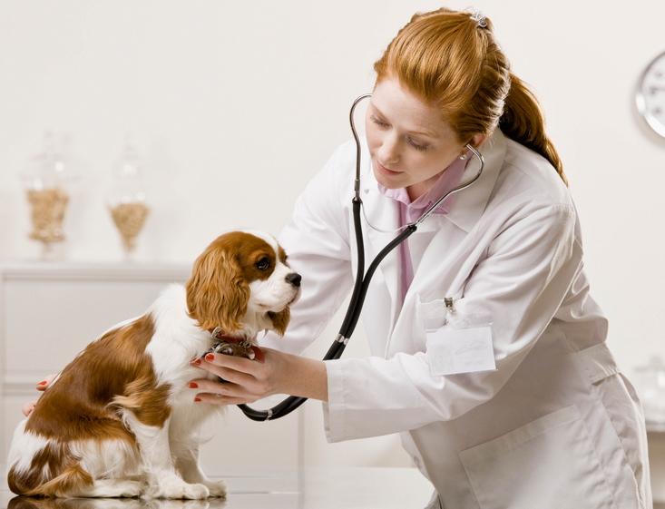 http://www.eastmananimalhospital.com/wp-content/uploads/2016/04/dogs-vet.jpg